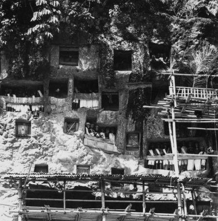 Tau taus in situ, an image taken near the village of Lemo in 1971