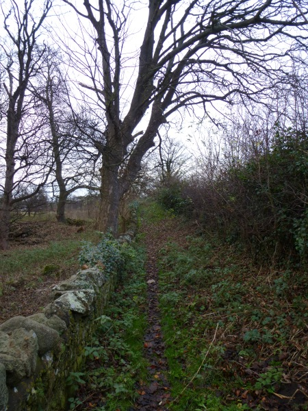 The path to Luffness Friary