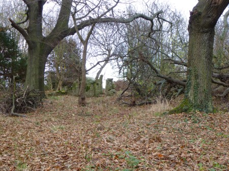 Ruins in the forest, Luffness Friary