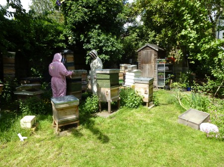 Checking the hives at Bee Urban, Kennington Park