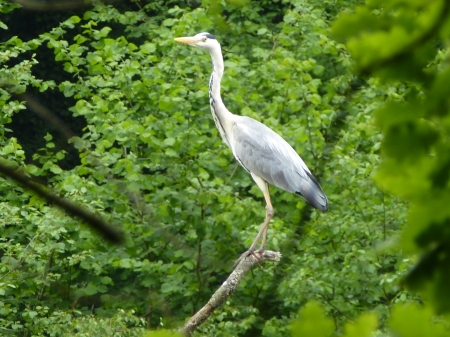 An elegant heron sits above the lake of Largoët