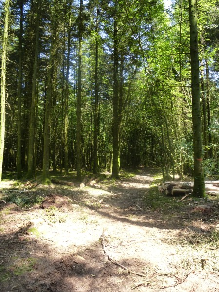 The path through the woods towards Babouin and Babouine