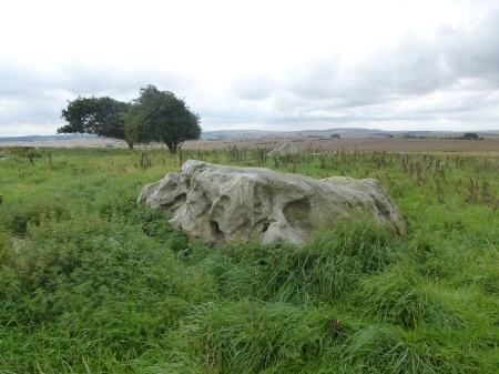 One of the huge sarsens of Fyfield Down