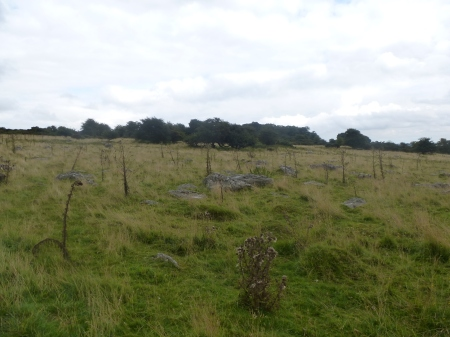 The stone-studded landscape of Fyfield Down