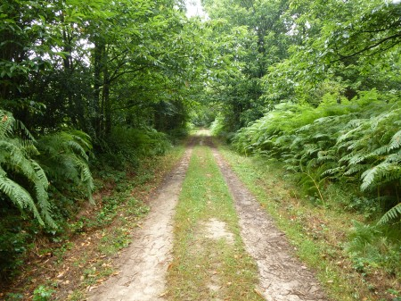 The path into the forest of Montneuf, Brittany