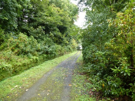 The magical overgrown driveway leading to Mavisbank House